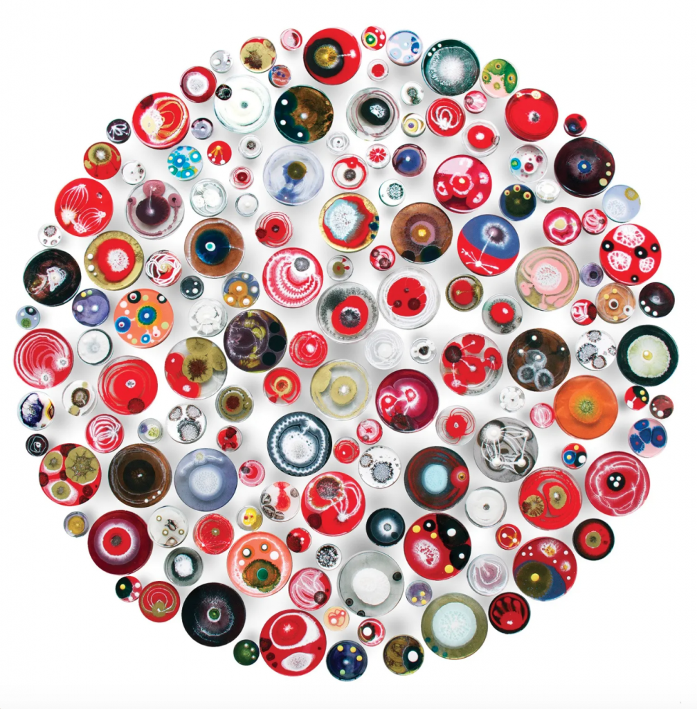 Klari Reis' work includes hand-painted petri dishes.